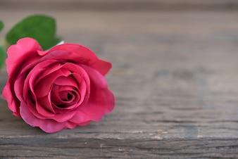 Gros plan de la rose rouge