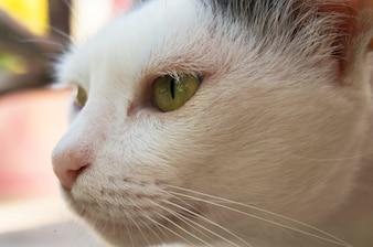 Head cat close up.