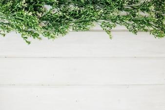 Herbes vertes et l'espace sur le fond