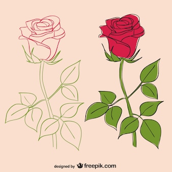 illustrations roses