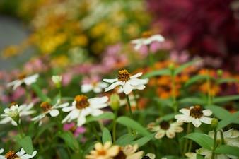 Jardin botanique coloré rose jaune