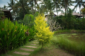 Jardin tropical luxuriant