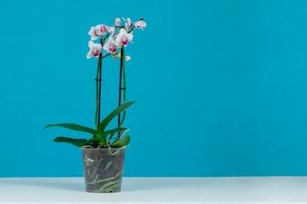 Joli pot avec des orchidées