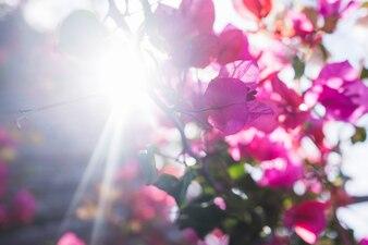 Jolies fleurs avec le soleil fond