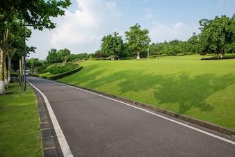 La belle route est entourée de verdure