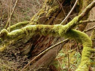 Mousse green plant vecteurs et photos gratuites - Mousse sur les arbres ...