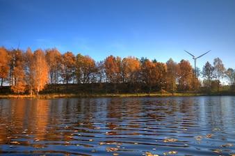 Lac avec des feuilles sèches