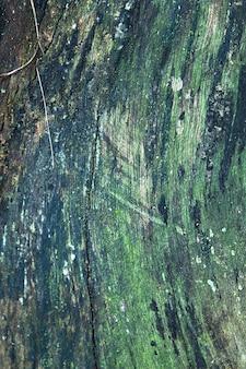 Le bois vert