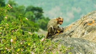 Le singe mange de la nourriture