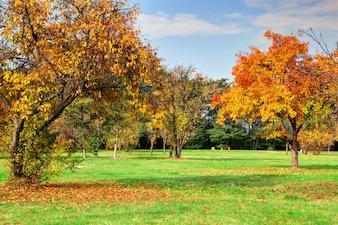 Les arbres dans un parc de beauté