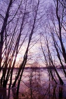 Les arbres entouré par l'eau