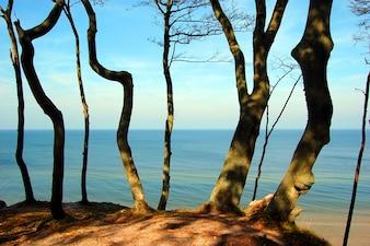 Les arbres près de la plage