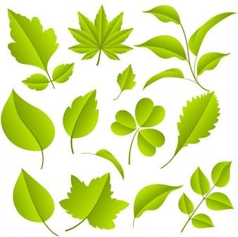 les feuilles vertes graphique vectoriel ensemble