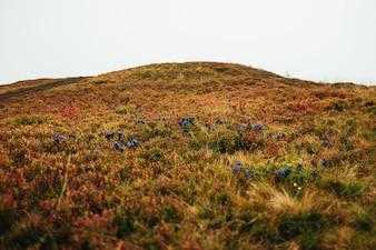 Les fleurs bleues poussent dans le champ