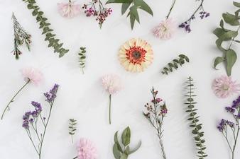Les jolies fleurs sur la surface blanche