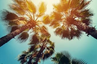 Les palmiers à noix de coco dans les côtes tropicales avec des tons vintage et le style de film.