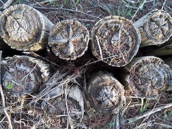 Les vieux troncs sur le sol