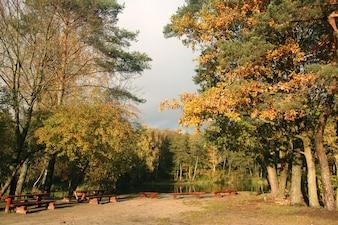 Lieu de pique-nique dans la forêt