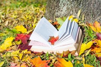 Livres ouverts avec des feuilles autour