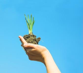 Main avec une plante