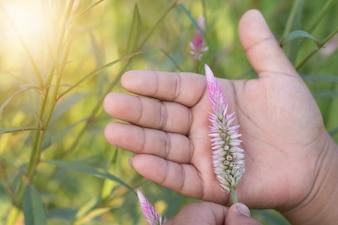 Main tenant la fleur de coq, vérifiant le concept de produit