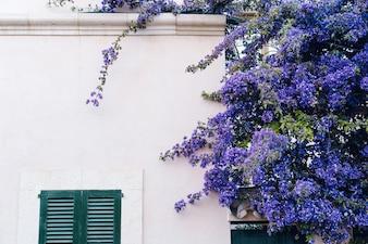 Maison avec une plante de fleurs violettes