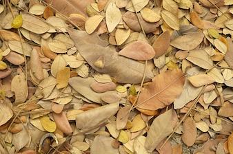 Modèle plante saison jaune vif