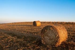 Moment de la récolte