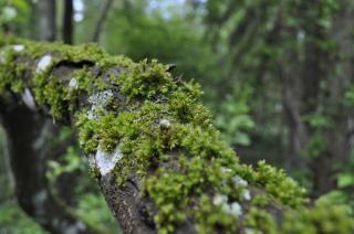 Mousse sur les arbres t l charger des photos gratuitement - Mousse sur les arbres ...