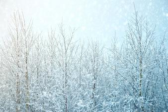 Nature, fond d'hiver.