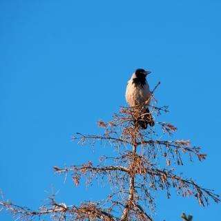 Nature oiseau sit