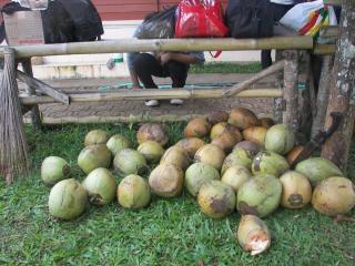 Noix de coco poussent sur un arbre t l charger des photos gratuitement - Arbre noix de coco ...