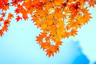 Orange feuilles avec le fond bleu