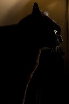 Panthère chat