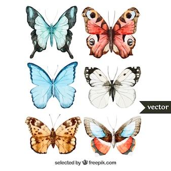 papillons peints à la main