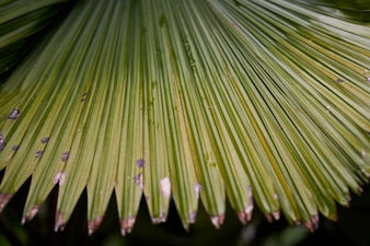 Parc forestier macro nature vert