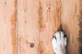 Patte de chien sur le parquet