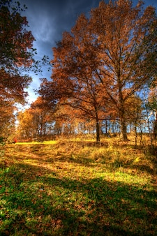 Paysage d'automne sur une journée ensoleillée