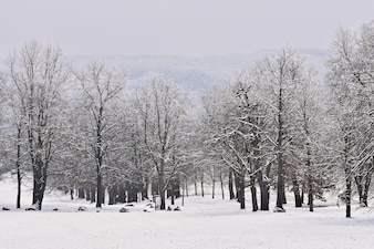 Paysage d'hiver - arbres glacés dans la forêt. Nature couverte de neige. Beau fond naturel saisonnier.