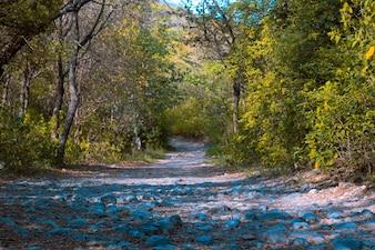 Paysage vert forêt feuille découverte scénique