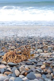 Pierres et corail sur la plage