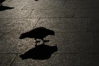 pigeon, vieille ville