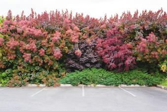 Place de parking à l'extérieur du mur de l'arbre