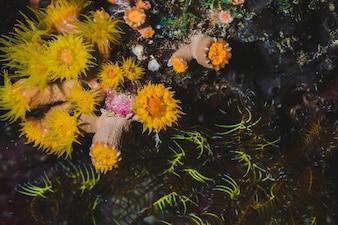 Plancher sous-marin avec coraux