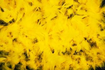 Plumes jaunes