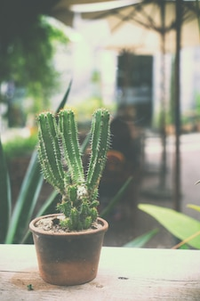 Pot de fleurs dans le café - cactus décoration de café style vintage.