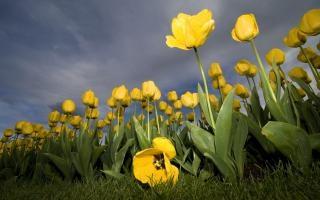 printemps, saison
