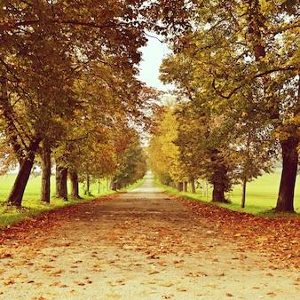 """""""Alley entre les arbres à l'automne"""""""