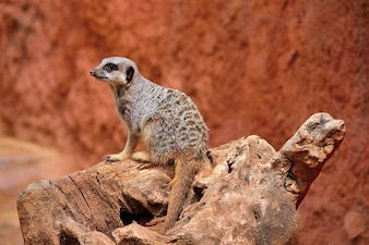 """Cute animal on rock"""