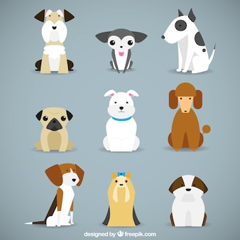 Races de chien collection